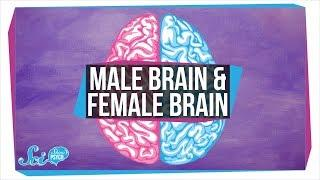 "Are There ""Male"" and ""Female"" Brains?"