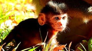 Why! Violet Female Monkey Was Warning To Other Young Monkey So Strong, Poor New Baby Monkey Viola