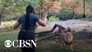 Woman climbs into lion exhibit at NYC zoo
