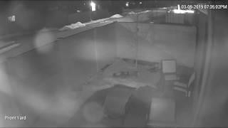 Kelowna RCMP - Video footage of stolen canine
