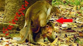 MG! What Does Sweetpea Doing To Female Maria Monkey, Sweetpea Bits Wtih Dydy&JR Bru