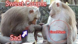 Amazing Sweet Couple Pigtail Monkey Grooming Each Others / Pitiful Her Husband Had Wound / PTM 1364