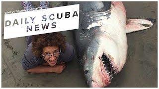 Daily Scuba News - Biologist Slammed For Shark Selfie