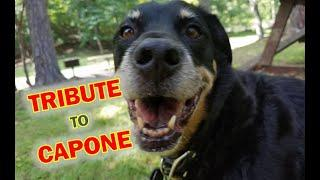 Tribute to Capone 1 Year After His Passing