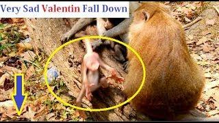 Felling Pity with Baby Valentin Fall Down by Duchess Push poor baby monkey
