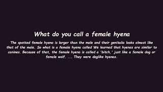 What do you call a female hyena
