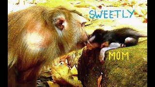 Surprise Lovely Kiss Pigtail Female Monkey Cara Show Love & Care baby Barbi.