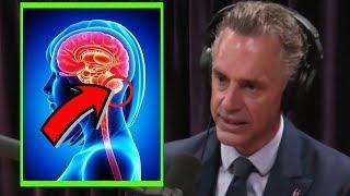 Jordan Peterson: Are Men and Women born with the same brain? W/ Joe Rogan