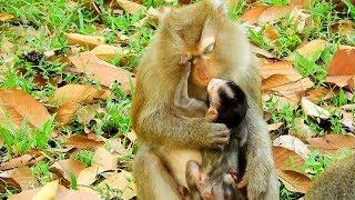 Lovely Pity Baby Monkey Kiss Female Monkey, Pity Baby Monkey Still Not Better