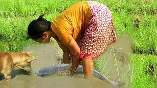 Finding big fish by smart woman and dog in The green rice field - How to catching(154)
