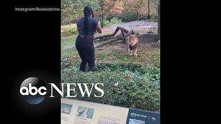 Zoo files criminal complaint after woman climbs into lion exhibit