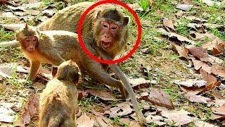 Cruelly! Female Monkey Will Bite Little Monkey Cos Help Her Baby, Brave Little Monkey  Not Afraid